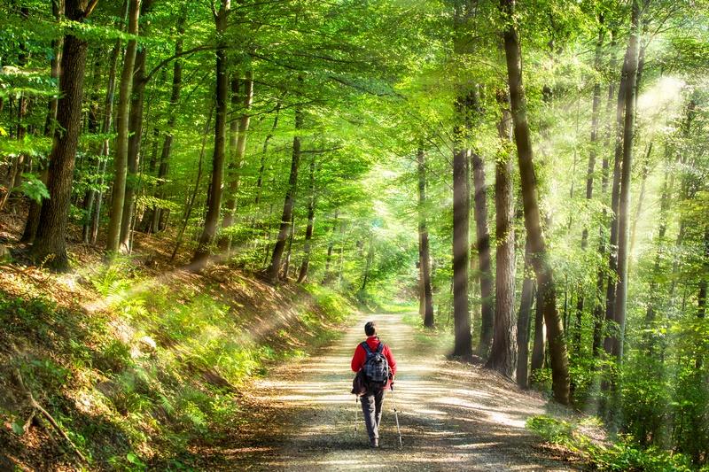 W maju zapraszamy na wycieczkę do Doliny Charlotty!